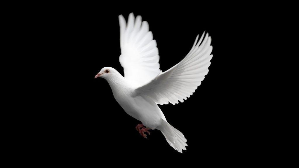 nằm mơ thấy chim bồ câu