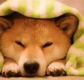 Mơ thấy chó phù hợp với con số may mắn