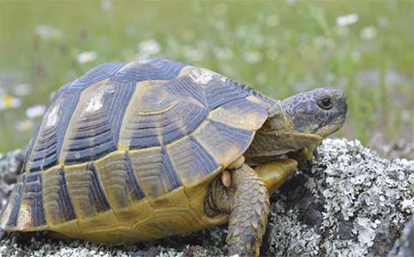 Nằm mơ thấy rùa là điềm báo gì? tốt hay xấu