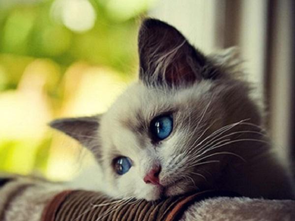Mơ thấy mèo biết bay là điềm lành hay dữ, đánh số mấy?