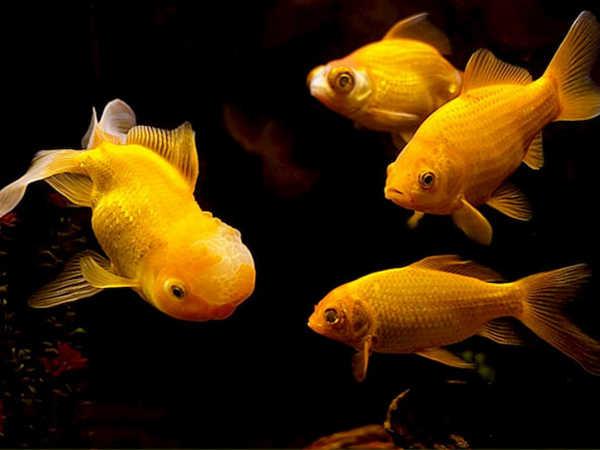 Mơ thấy bắt cá đánh con gì, điềm báo hên hay xui?