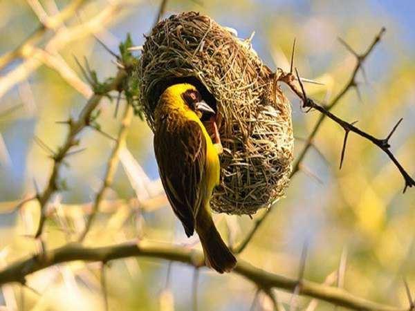 Mơ thấy tổ chim là điềm lành hay dữ, đánh con số nào chắc ăn?