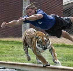 Mơ thấy hổ đuổi đánh con gì điềm báo lành hay dữ?